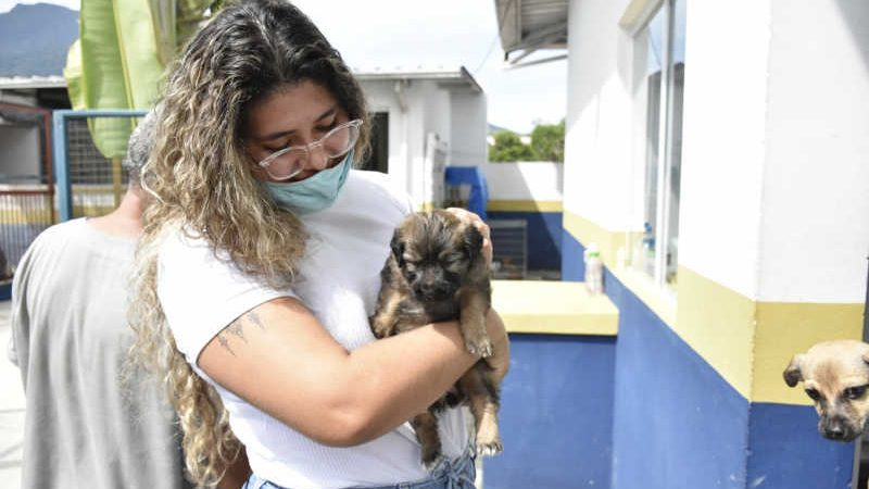 Adoção de animais em Ilhabela (Foto: Divulgação/PMI