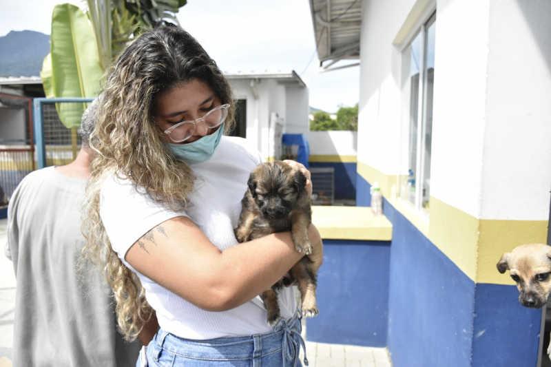 Em meio à pandemia, Ilhabela (SP) aposta em adoção virtual de cães em gatos