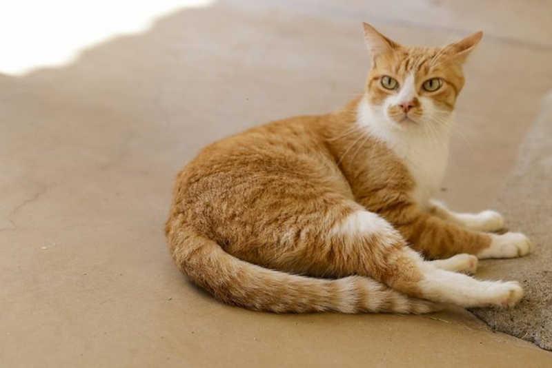 Prefeitura de Votuporanga (SP) abre inscrições para castração gratuita de cães e gatos