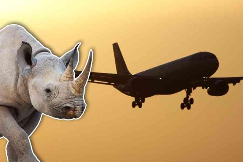 Passageiros de vários voos terão que assistir filme sobre o chifre do rinoceronte