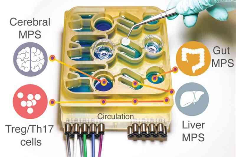 Chip com múltiplos órgãos supera experimentos com animais