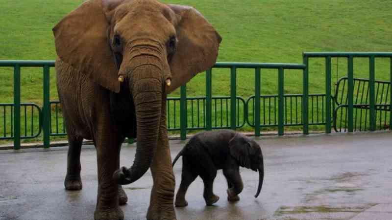 Funcionário de zoológico morre após ser atingido por tromba de elefante