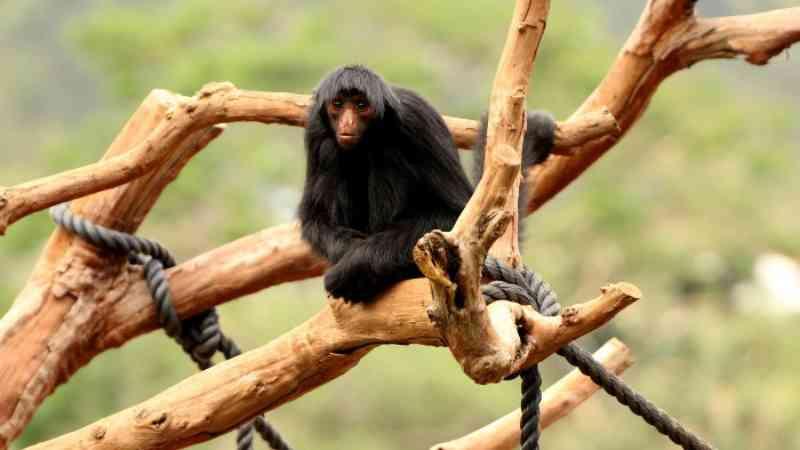 Lista com animais silvestres quer ampliar mercado de pets no país