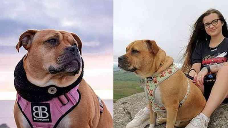 Resgatada em estado terminal, cadela curte últimos dias de vida