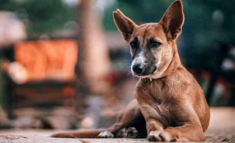 Centro de Zoonoses cuida de 48 cães e gatos de famílias alagadas em Rio Branco, AC