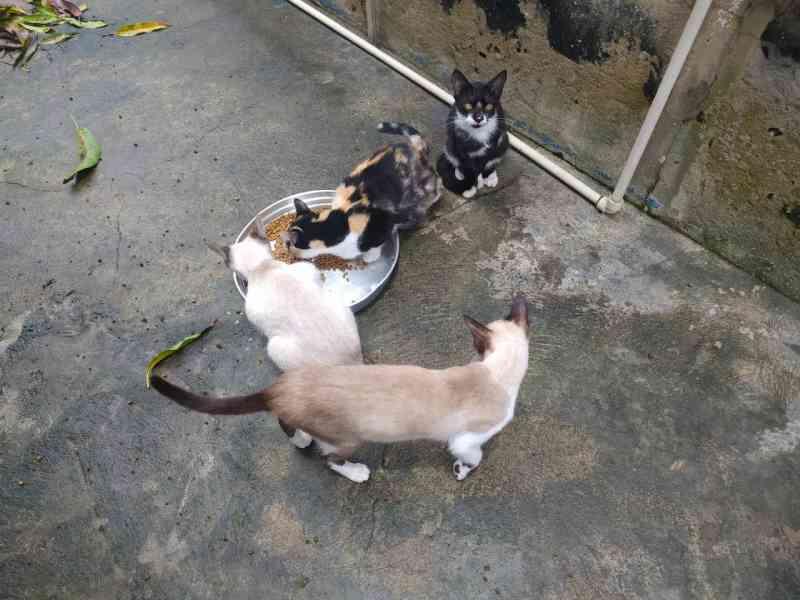 Cuidadora morre em Manaus (AM) e vizinhos tentam encontrar tutores para gatos