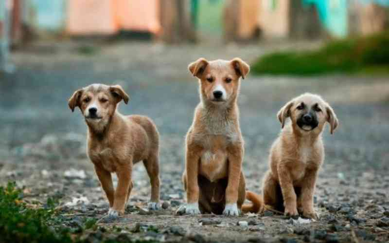 FAS e Sema tem cadastramento aberto para doação de ração a protetores e cuidadores de animais no AM