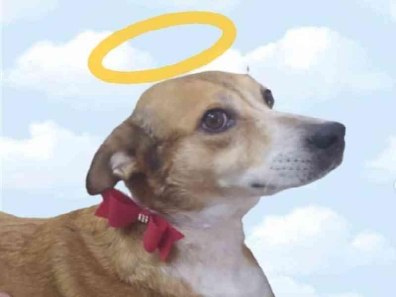 Cachorra cuidada por ONG é morta por envenenamento em Caculé, BA