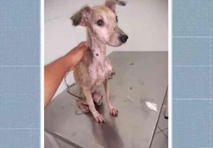 Cães e gatos em situação de maus-tratos são resgatados de casa em Itabuna, BA; animais estão desnutridos