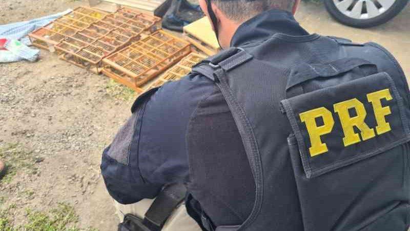 Polícia resgata pássaros em situação de maus-tratos amontoados dentro de carro