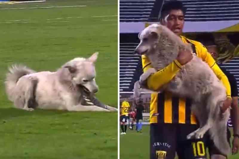 Cão de rua interrompe partida de futebol profissional e é adotado por jogador