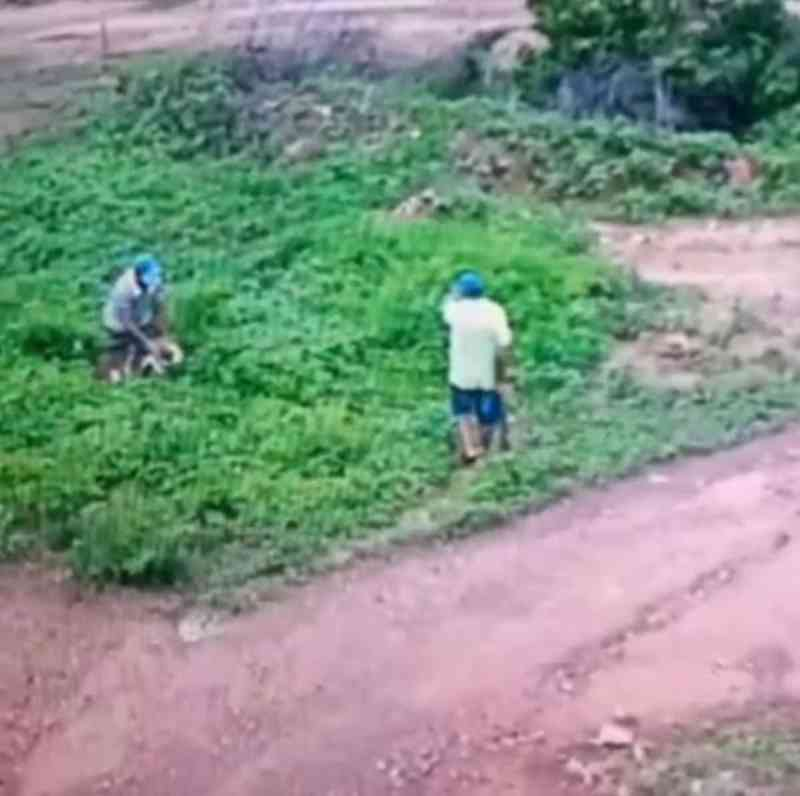 Polícia Civil identifica e indicia suspeitos de matar a pauladas um cachorro em Paramoti, CE