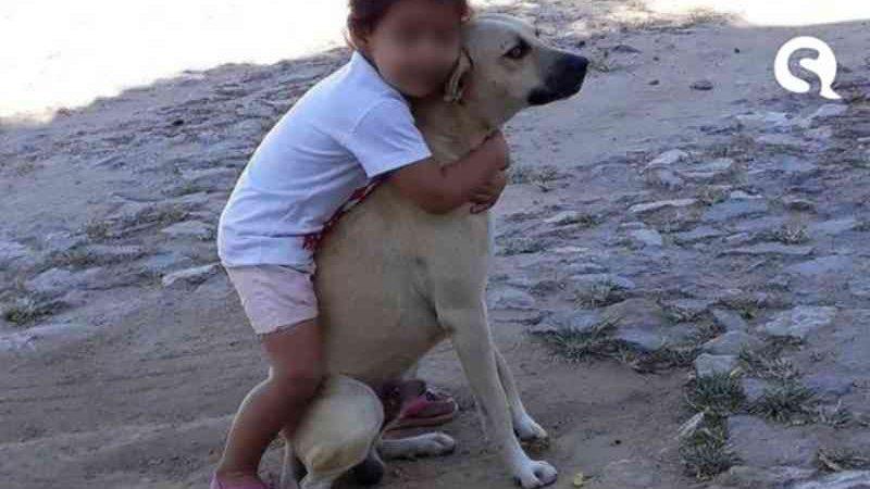 Crueldade: cão é encontrado carbonizado na zona rural de Santa Quitéria, CE