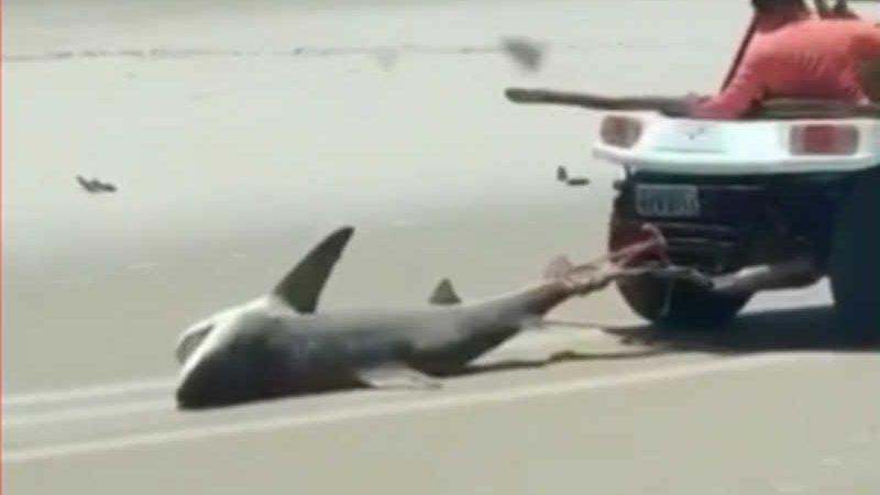 Tubarão morre após ser encontrado na Praia do Balbino, no litoral do Ceará