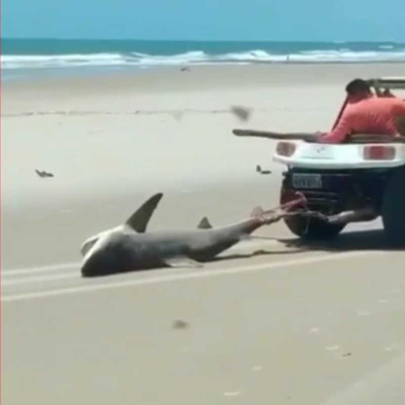 Seis pessoas envolvidas na morte de tubarão na Praia do Balbino, no Ceará, são autuadas por crime de maus-tratos