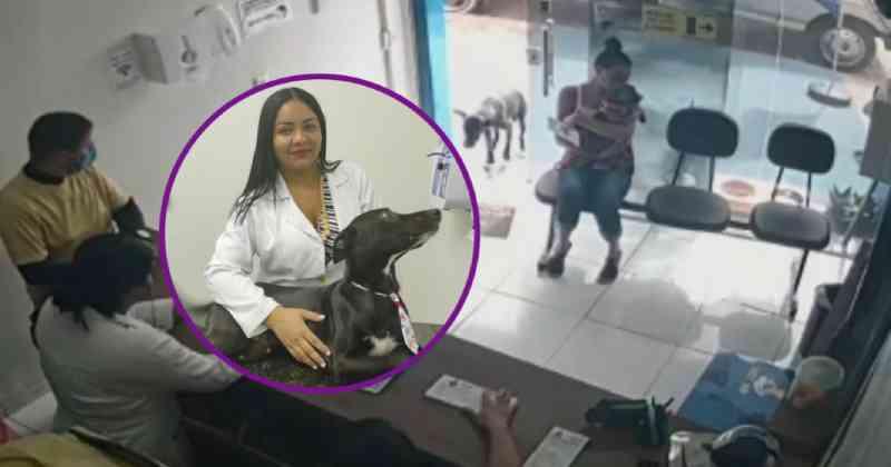Cachorro com tumor que entrou sozinho em clínica veterinária no Ceará faz sua 1ª quimioterapia e passa bem