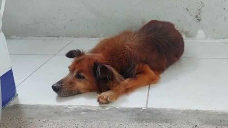 Lealdade do cão ao seu dono comoveu os funcionários do Hospital do Coração, em Fortaleza, que cuidaram do animal. — Foto: Hospital do Coração/ Divulgação