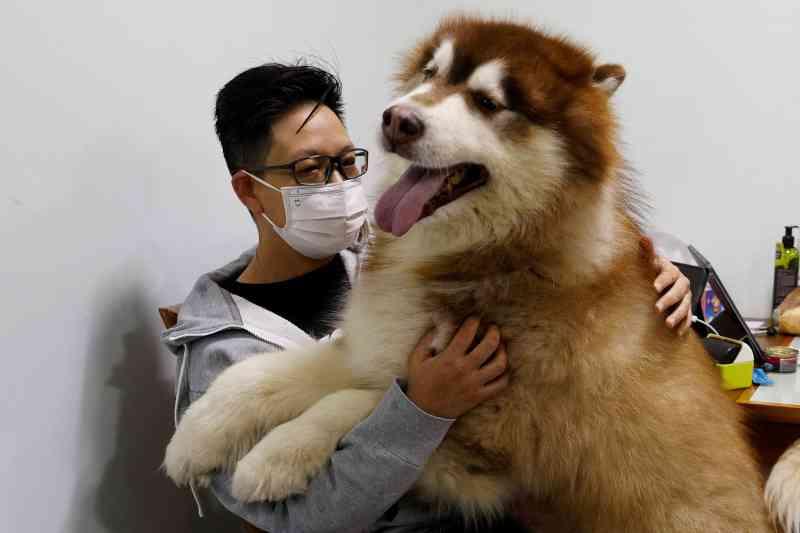 A onda de emigração de Hong Kong tem deixado centenas de animais de estimação para trás