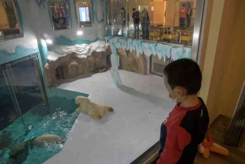 Ativistas criticam hotel com ursos polares expostos 24h por dia na China
