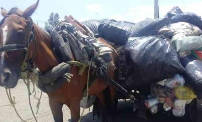 Agora eles correrão livres: 46 cavalos foram substituídos por triciclos em Antioquia, na Colômbia