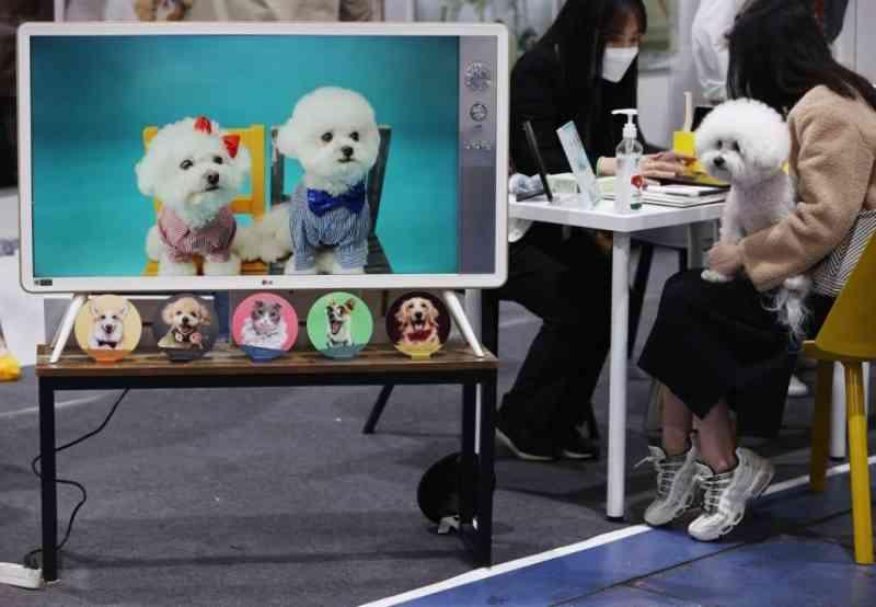 Governo da Coreia do Sul busca reconhecer os animais como 'seres vivos', não como 'objetos'
