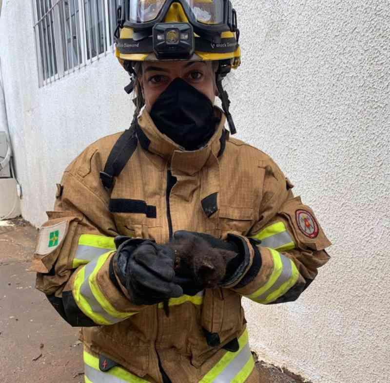 VÍDEO: bombeiros serram chapa de metal para resgatar filhote de gato no DF