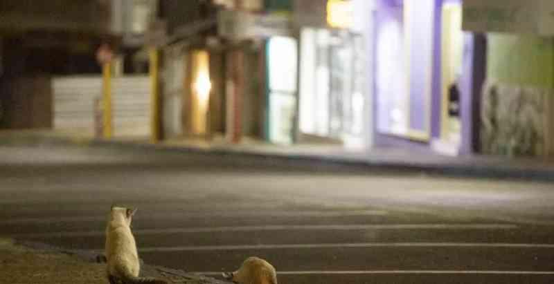 A triste realidade dos animais abandonados em Dubai, cidade do luxo