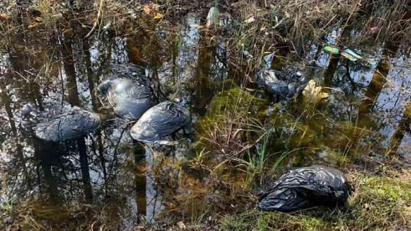 10 cães encontrados mortos em sacos de lixo em vala na Carolina do Norte, EUA