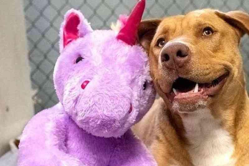 Cachorro ganha bichinho de pelúcia que roubou cinco vezes e é adotado