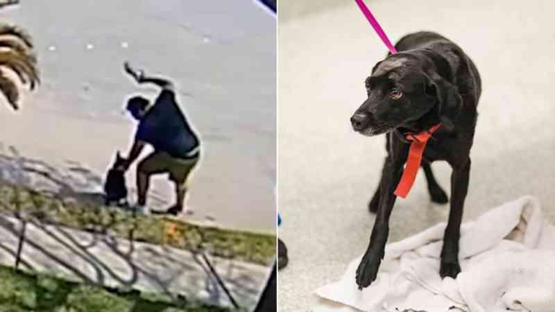 Homem é visto batendo em seu cachorro mais de 20 vezes na área de Katy, EUA