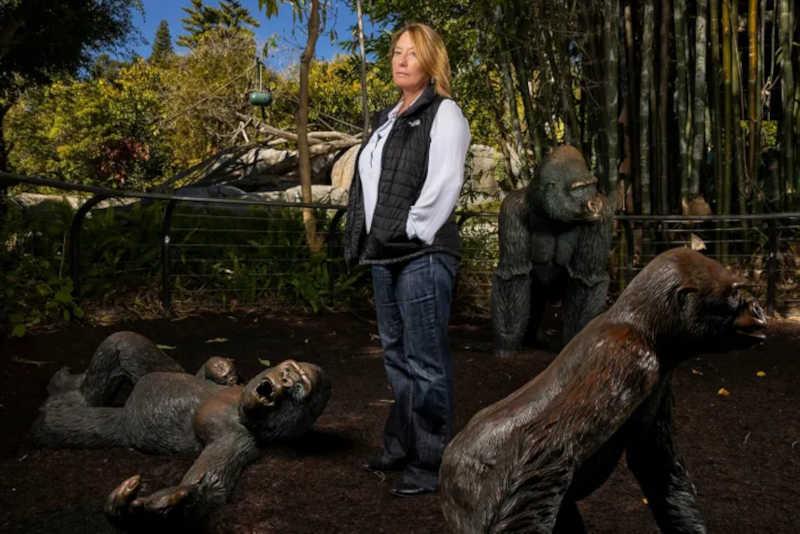 """Nadine Lamberski, diretora do departamento de conservação e saúde de vida selvagem do Zoo Wildlife Alliance de San Diego, fotografada junto ao habitat dos gorilas. Depois de um mês conturbado a cuidar dos primeiros primatas não humanos a testarem positivo para o coronavírus a nível mundial, Nadine decidiu vacinar os outros grandes símios nas instalações. """"Ao longo da minha carreira nunca tive acesso a uma vacina experimental tão cedo no processo e nunca tive um desejo tão profundo de querer usar uma"""", diz Nadine Lamberski. FOTOGRAFIA DE BRENT STIRTON"""