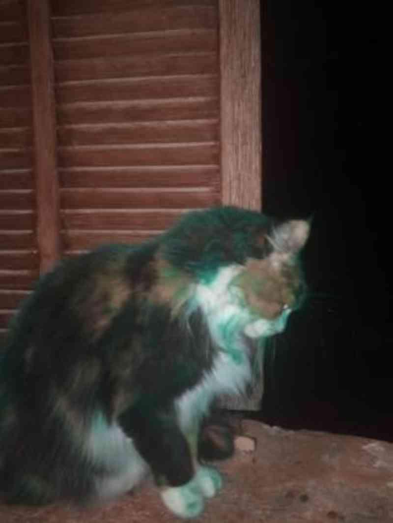 Novo caso de maus-tratos contra animais: gatos pintados com spray são vistos em Alaró, na Espanha
