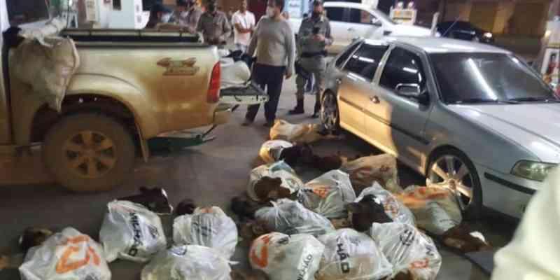 Mais de 20 bezerros são resgatados após flagrante de partir o coração em Anápolis, GO