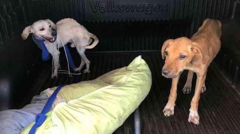 Mulher é presa por trancar cães sem comida e água por cinco dias em Mineiros, GO