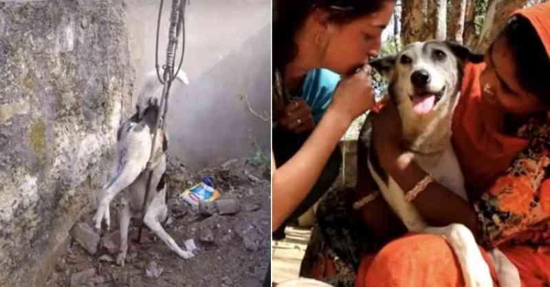 Cachorrinha presa em barra de metal é salva graças à equipe de resgate e ganha novo lar