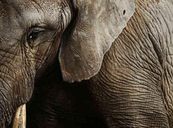 Na tentativa de tirar a selfie perfeita com um elefante, indiano acaba morto pelo animal