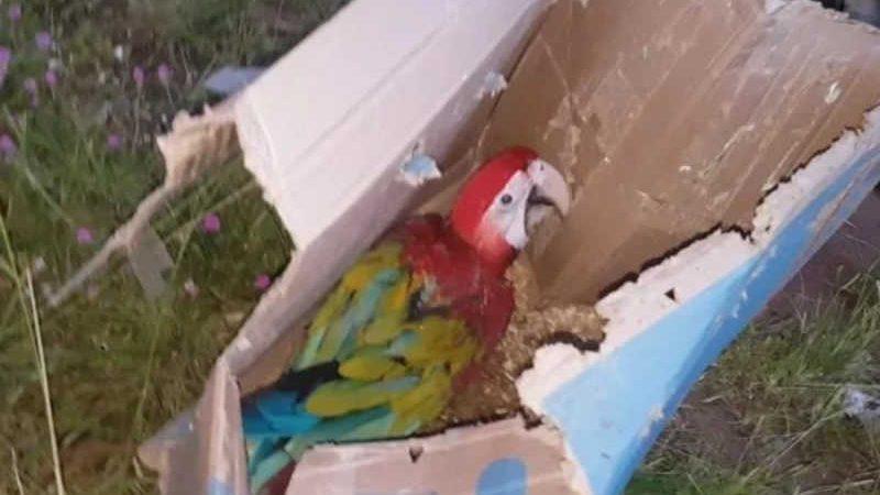 Vereador é detido por maus-tratos a animais silvestres no Maranhão