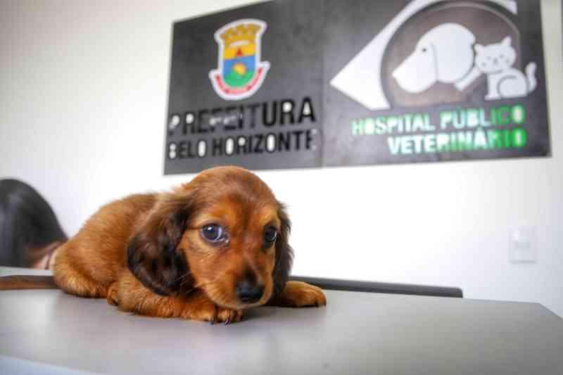 Hospital veterinário é inaugurado em Belo Horizonte (MG) para atender cães e gatos