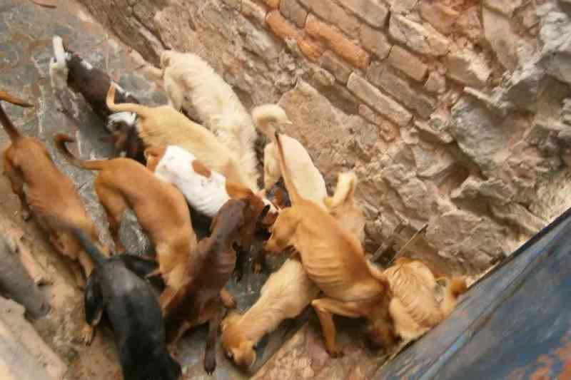 Cresce o número de casos de abandono de animais em Belo Horizonte, MG