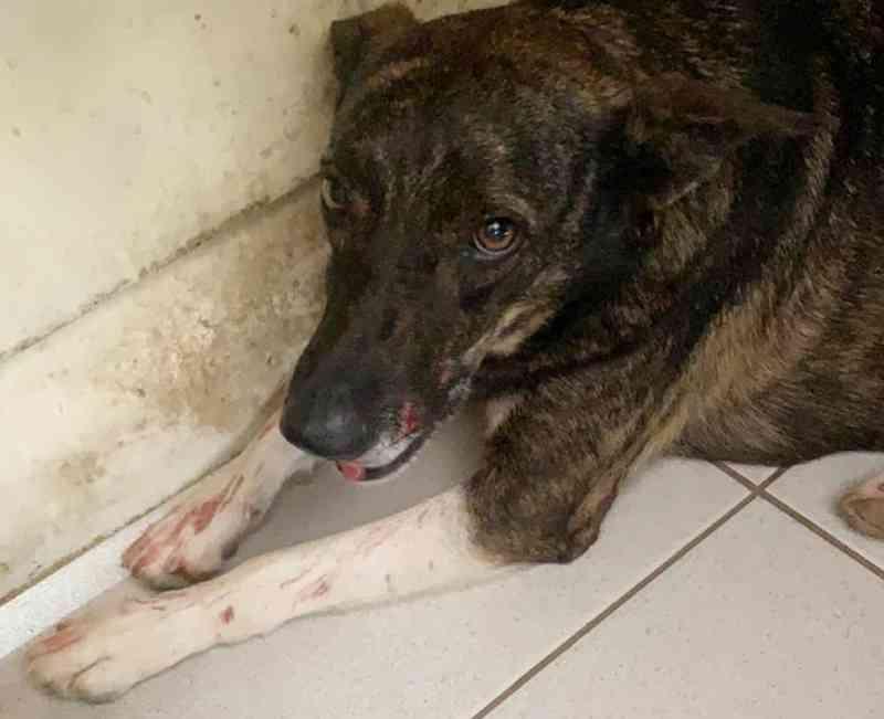 Homem é preso após jogar pedra e chinelo contra cão em Boa Esperança, MG