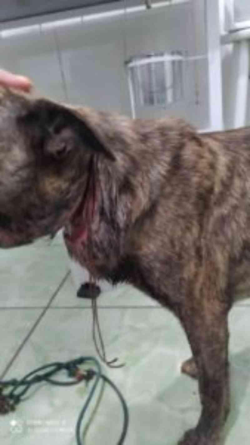 Cachorro sofre maus-tratos e tentativa de enforcamento em MG