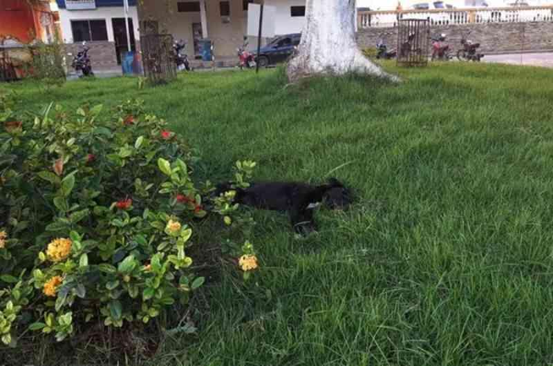 Cães são vítimas de envenenamento no centro de Guiricema, MG