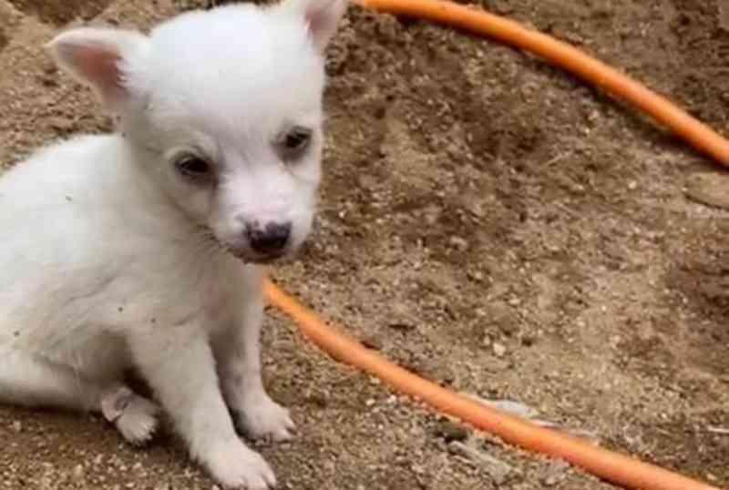 Dez filhotes de cachorro que sofriam maus-tratos são resgatados pela PC em Juiz de Fora, MG