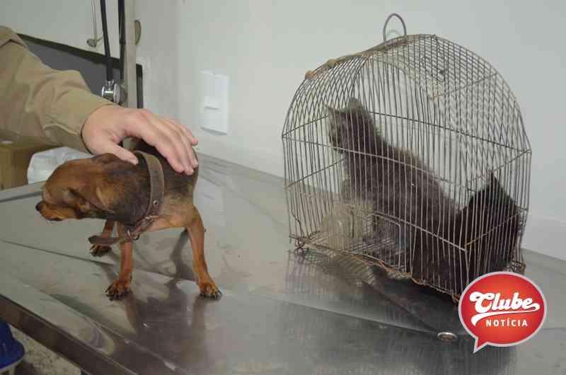 Idosa é flagrada mantendo animais em situação de maus-tratos em Lagoa Formosa, MG