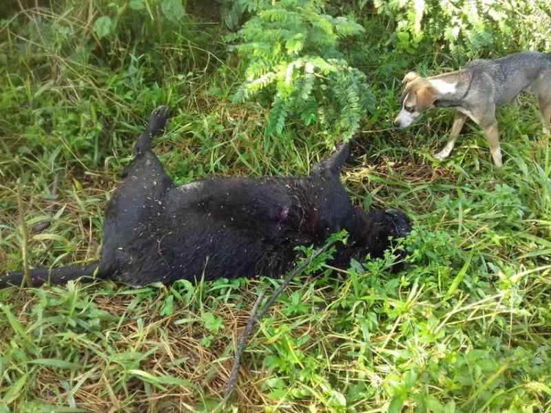 Cão é assassinado a facadas no bairro Planalto em Patos de Minas, MG; vídeo mostra suspeito
