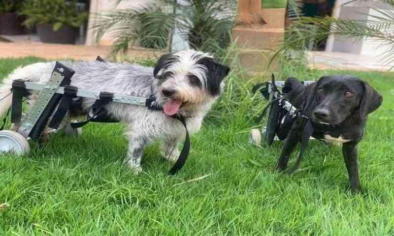 Mais de 150 cães e gatos vítimas do rompimento de barragem em Brumadinho (MG) esperam de adoção