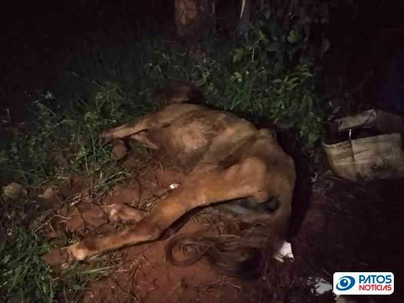 Idosa de 64 anos é detida por suspeita de maltratar um cavalo em Patos de Minas, MG
