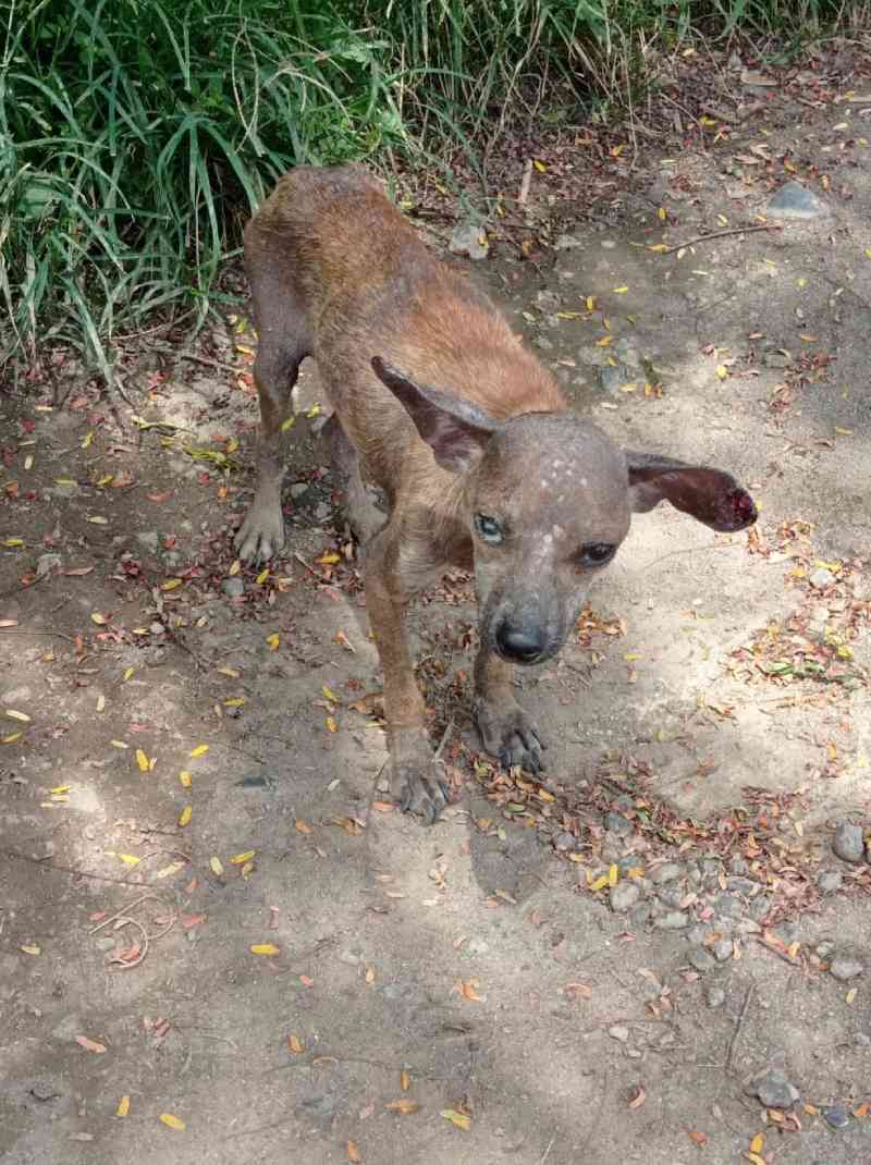 Jovem é filmado matando cachorro a pauladas e é preso em Cava Grande, distrito de Marliéria, MG; veja vídeo