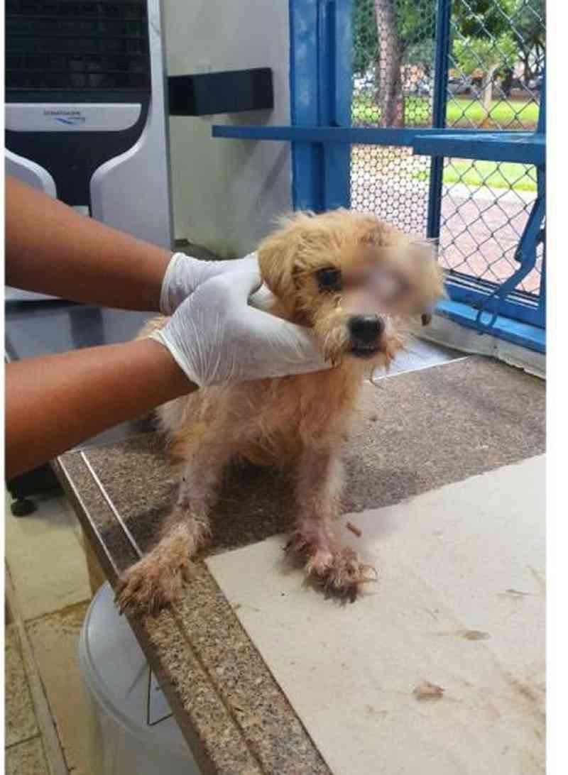 Um dos 4 cães vítima de maus-tratos e que comia 'feijoada velha' quando tutor foi preso ficou cego de um olho