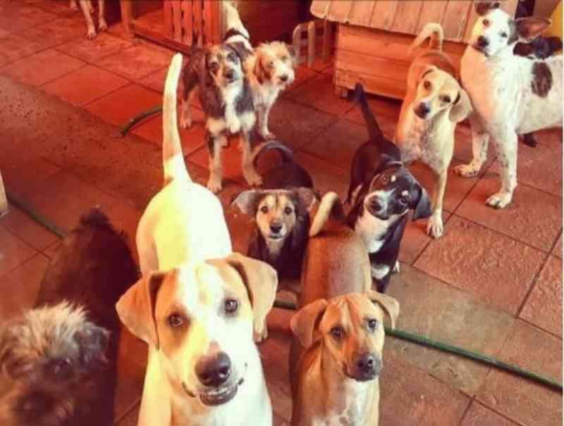 Após seis anos e 600 resgates, Instituto Guarda Animal fecha as portas em Campo Grande, MS